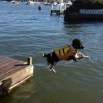 Pets aboard!