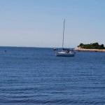 Buzzards: A bay with attitude