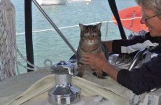 Cats onboard