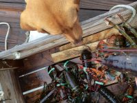 """Cider, the dog Jack adopted about 18 months ago, warily inspects a crate of """"bugs."""" Photo by Jack Farrell"""