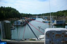 Midwinter: Guess the harbor, win a hat!